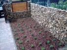 Levendula a kertben - Szigetszentmiklós - kertépítés képek